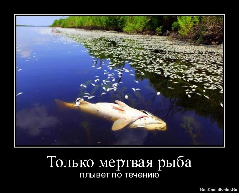 Все само собой образуется лучше не задумываться о будущем