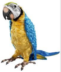 Заблуждение Попугаи умеют говорить