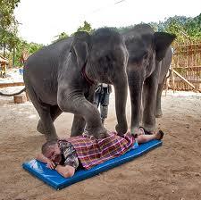 Миф слон неуклюжее животное