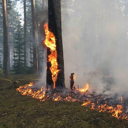 Предубеждение Лесные пожары наносят большой ущерб